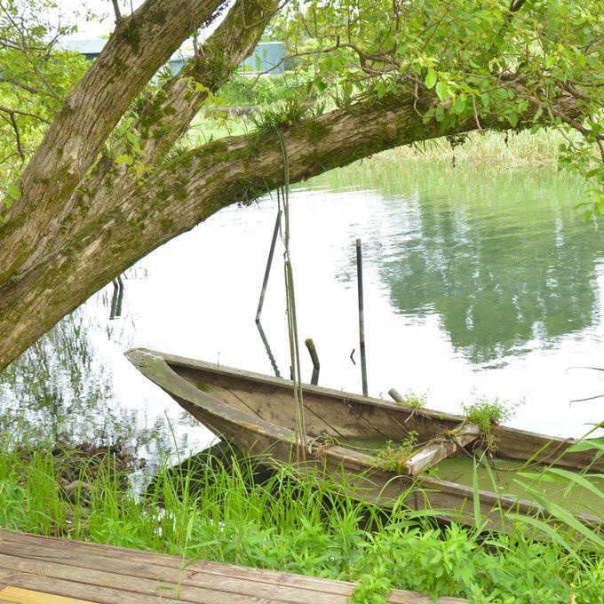 「日本遺産」にも認定された琵琶湖の水と食の文化