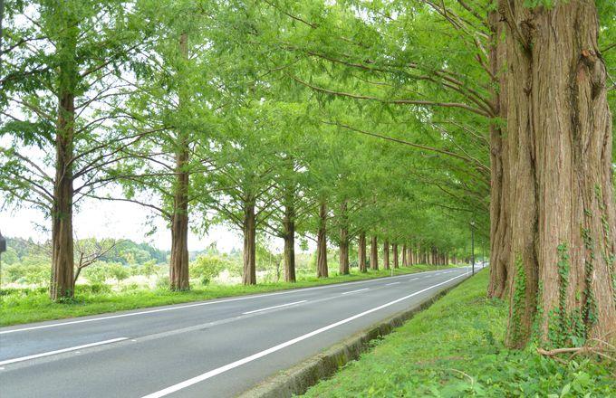 SNS映えスポットが多い琵琶湖西側