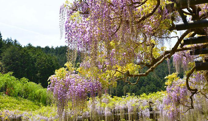 水仙やツツジも綺麗な花の公園