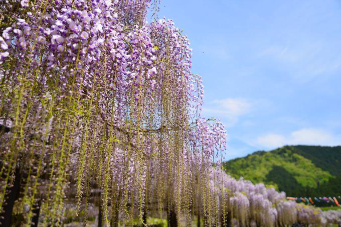 大阪や京都からもアクセスしやすい和田山