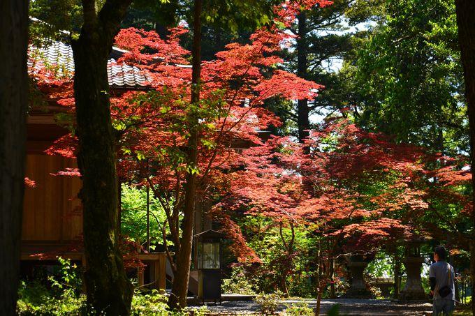 秋の美しさもおすすめの白毫寺
