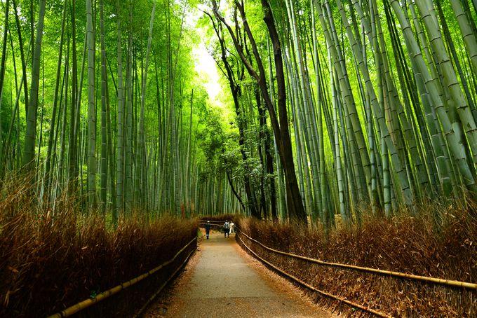 嵐山から嵯峨野へ続く竹林の道