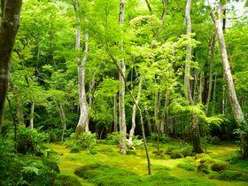 白拍子が求めた静穏の世界…嵯峨野「祇王寺」で苔とモミジに包まれる