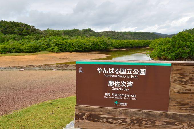 やんばるに広がる沖縄本島最大のマングローブ(ヒルギ林)