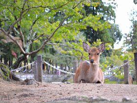 奈良公園周辺でおすすめ!食べておくべき「奈良グルメ」5選