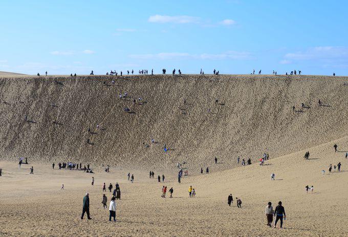 東西16kmにわたる 広大な鳥取砂丘