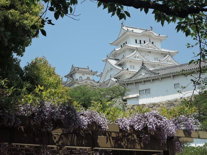 藤のかんざしをかけた様なこの姿。おめかしした姫路城を1枚。