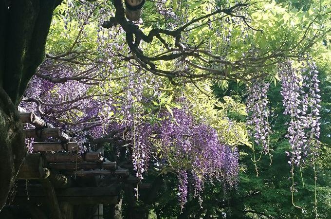 ああ!日本庭園の美しさここにあり。