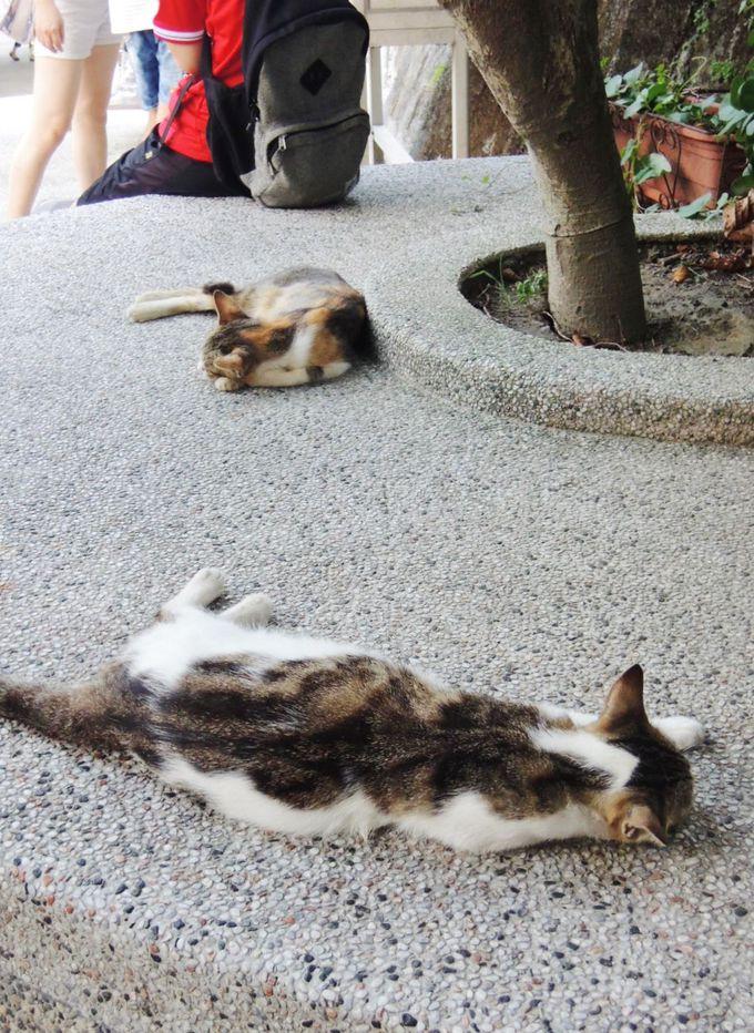 8.世界6大猫スポット「ホウトン」で猫ちゃんに癒やされる