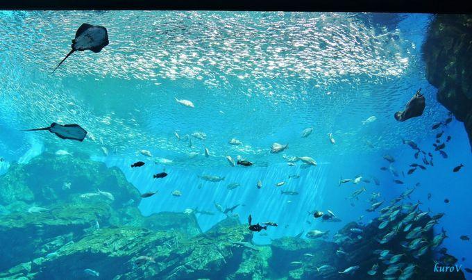 世界三大漁場を再現した巨大水槽。うみのゆらめきが圧巻!