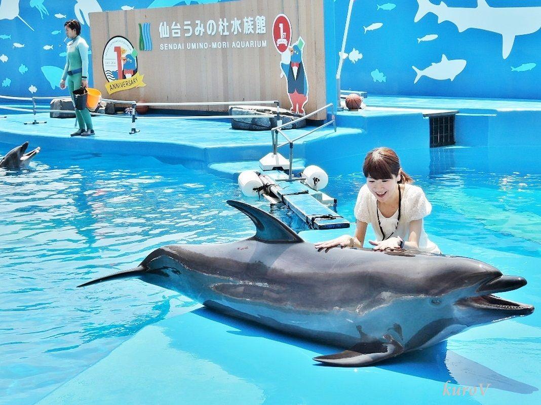 仙台うみの杜水族館が楽しい!イルカにさわって写真をとろう!