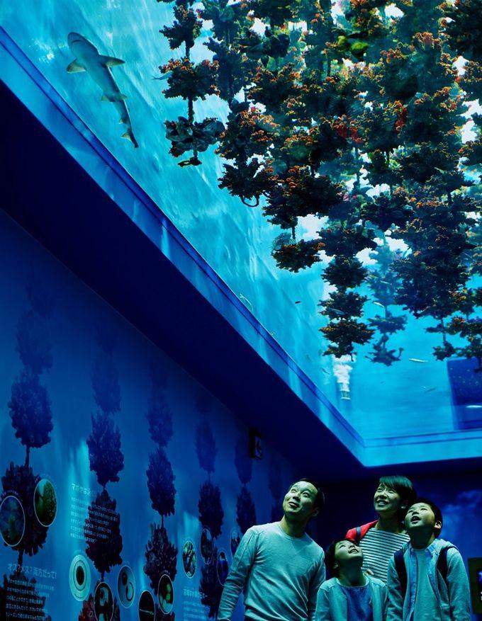 まるで三陸の海の底に潜ったよう!おもしろい写真もとれるよ。