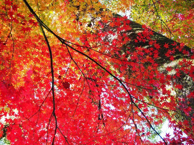 平松茶屋まで登る小道もすばらしい!