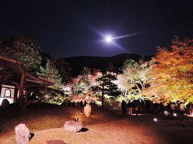 京都「高台寺」夜間拝観のライトアップ!桜も紅葉も幻想的