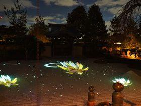 高台寺の夜間拝観ライトアップと紅葉!自然の幽玄美