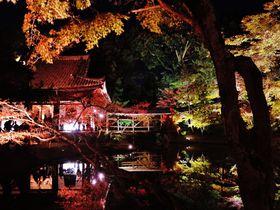 京都「高台寺」夜間拝観のライトアップ!紅葉の臥龍池は必見