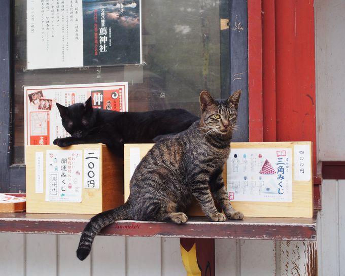 参拝と共に猫に癒される!