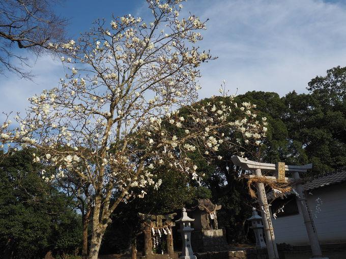 四季折々の花咲く 気持ち良い境内