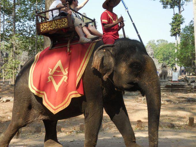 まるで王様気分!?アンコール・トムで象乗り体験ができる!