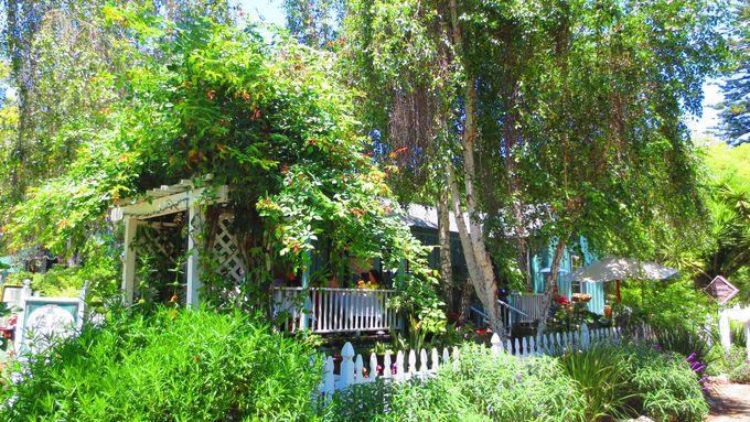 美しすぎる木々に埋もれたカフェ&レストラン「ザ・ティーハウス」