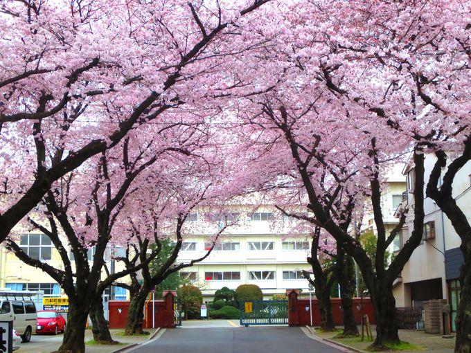 7.川越女子高校