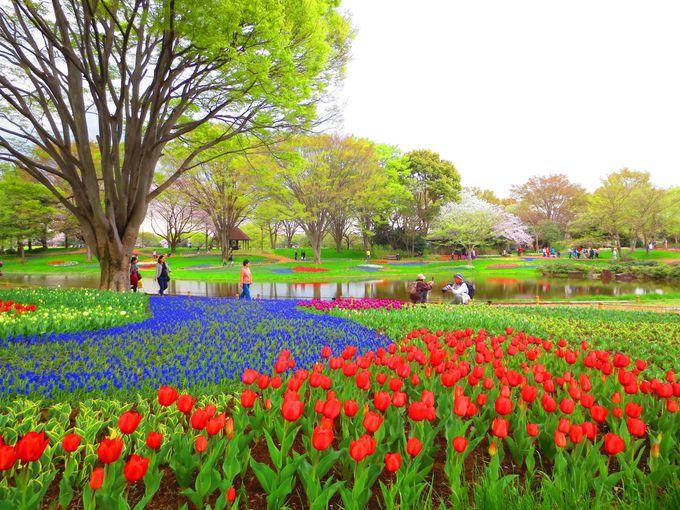 やはり見逃せない、春の「渓流広場」