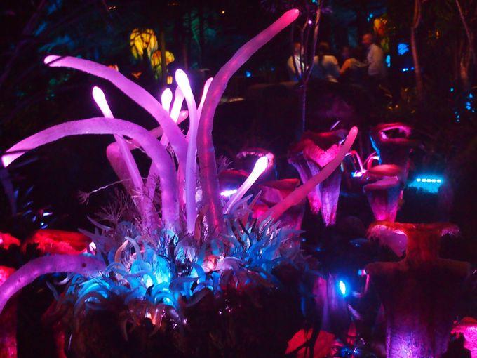 パンドラの美しさがさらに増す夜の訪問は必須!