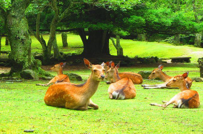 野生鹿のたまり場「大元公園」〜「大聖院」はお勧め散策ルート