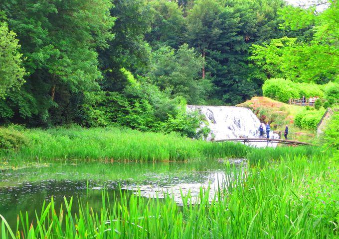 深い森と水辺に浮かび上がる幻想風景