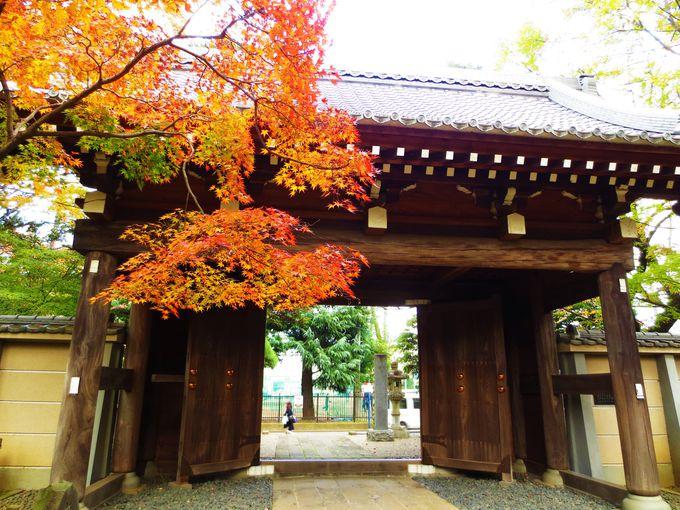 風情ある門が映える紅葉スポット「天台宗別格本山 中院」