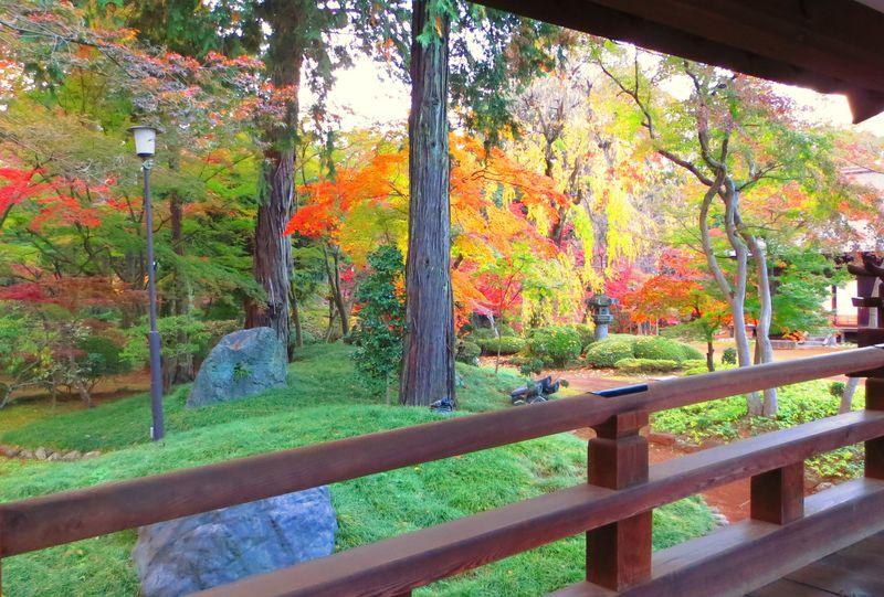 秋の川越観光、紅葉の見頃とおすすめ紅葉スポット5選
