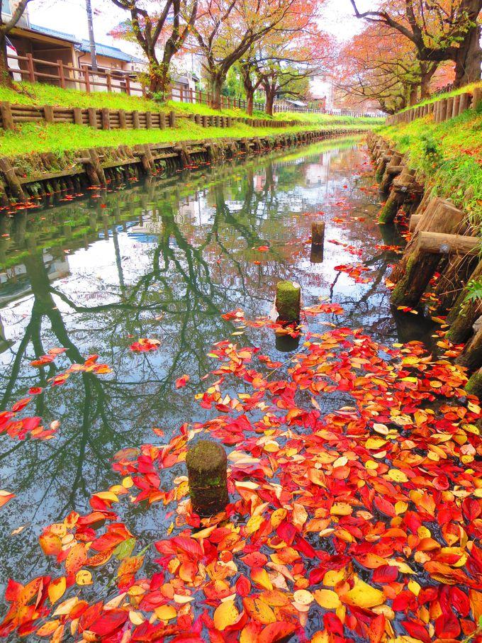 桜の贈り物とパワースポットのご神木は必見「氷川神社と新河岸川」