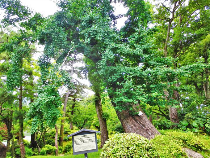 1日目午後後半〜夜:日本庭園に残る原爆の名残り「縮景園」と世界遺産「原爆ドーム」の夜景
