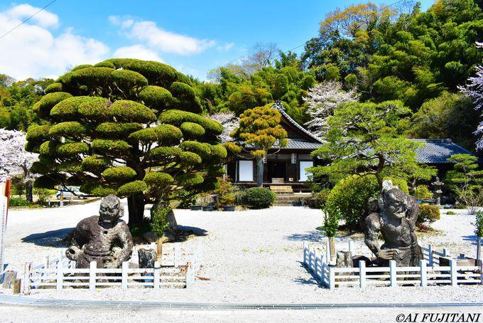 国宝「臼杵石仏」は桜の穴場