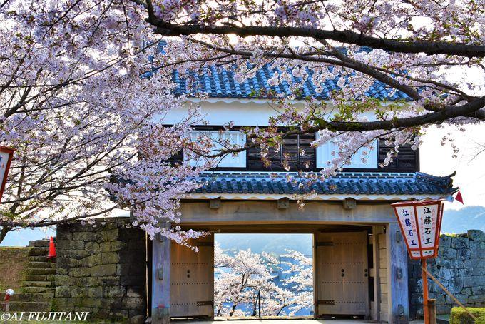 二度見たい!城址の桜の昼と夜