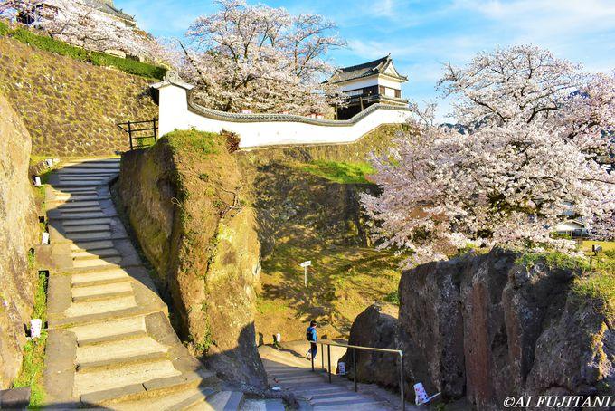 桜の花見の一番人気「臼杵城址」