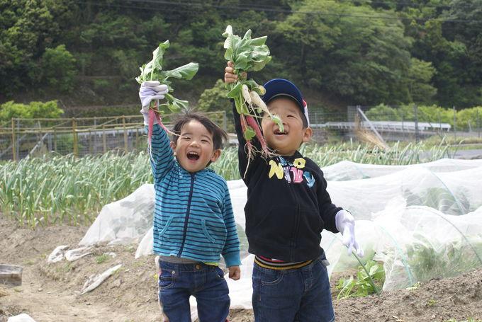 臼杵市の食べるお宝「ほんまもん農産物」