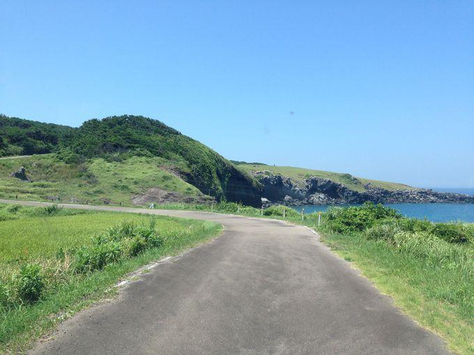 すべてが規格外の島ドライブが楽しい