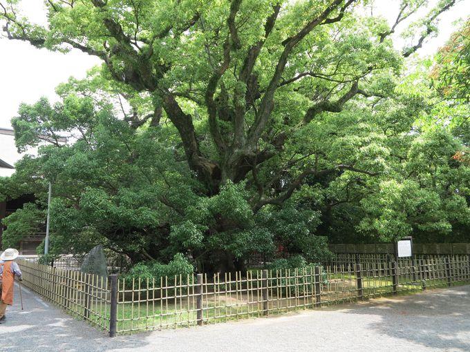 浜松で家康ゆかりの地を巡る