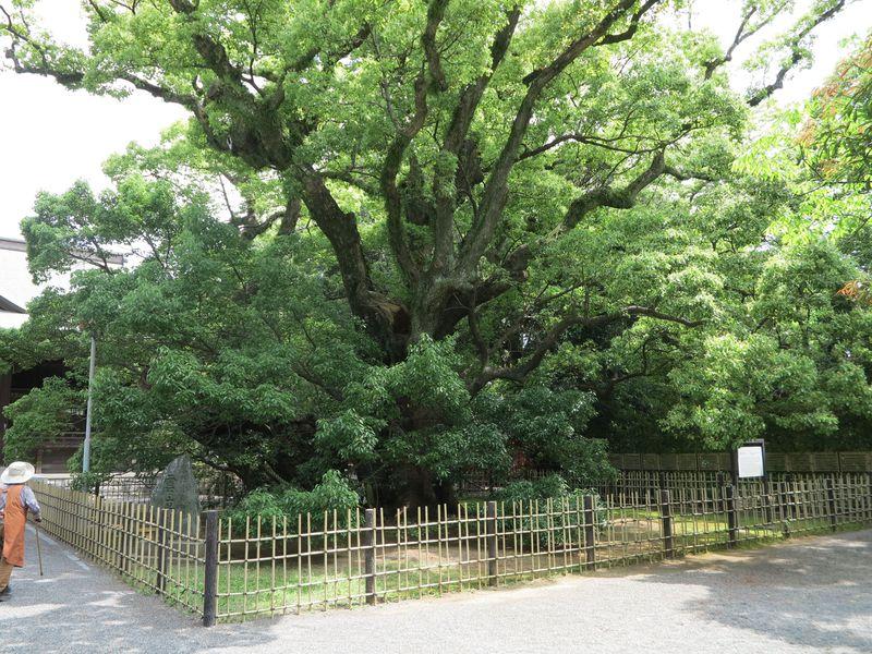 出世する散歩道!? 浜松で家康の足跡を辿る「家康の散歩道」