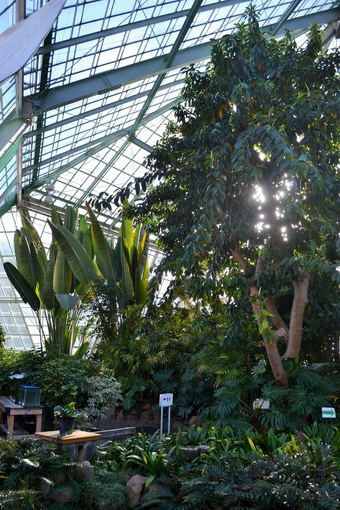 一年中ぽっかぽかの温室は熱帯植物の宝庫
