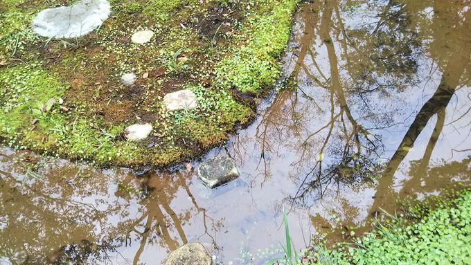 「水庭」を五感で体感する鑑賞のツボ