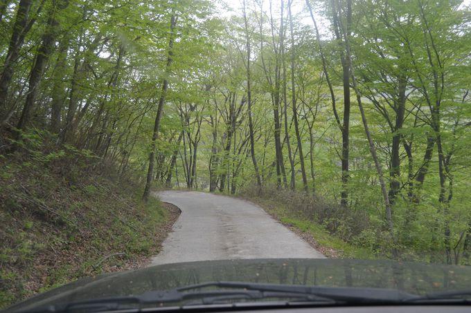 送迎車じゃないとムリ!ガードレールのない山道を進む