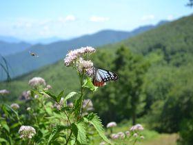 8月しか見れない蝶が乱舞する!山形蔵王プチ避暑ハイク