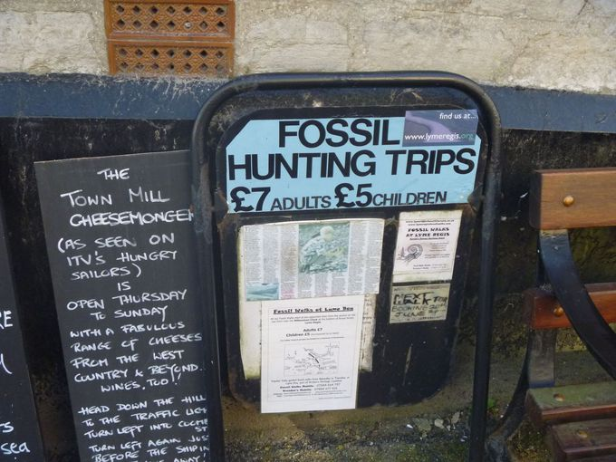 化石ツアーで宝探しに挑戦!