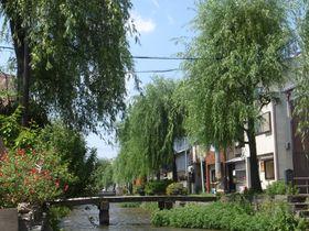 名作『古都』に描かれた地!新緑の京都で巡るいにしえの聖地巡礼