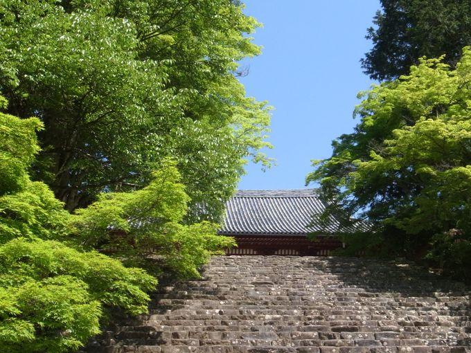 もみじの青葉に包まれる高雄・神護寺
