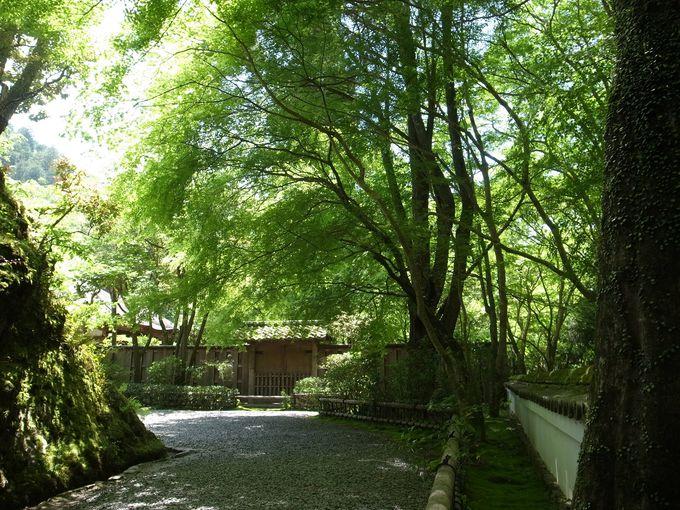 谷筋の風に吹かれる、高山寺