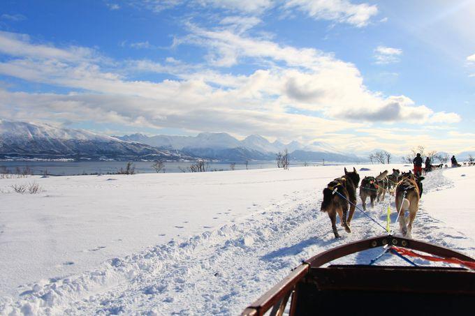 犬ぞりに乗って雪原を駆け抜けよう!
