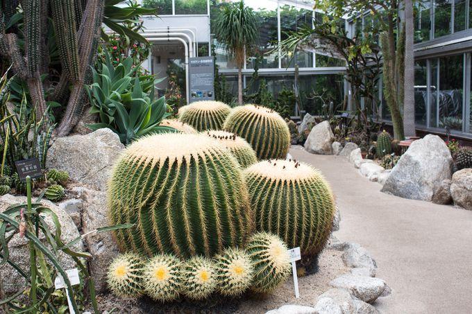 珍しい植物が楽しめる温室